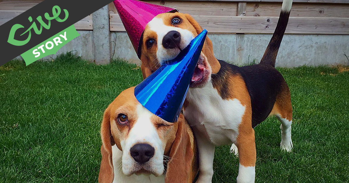 louie the beagle saving the beagle universe givewp