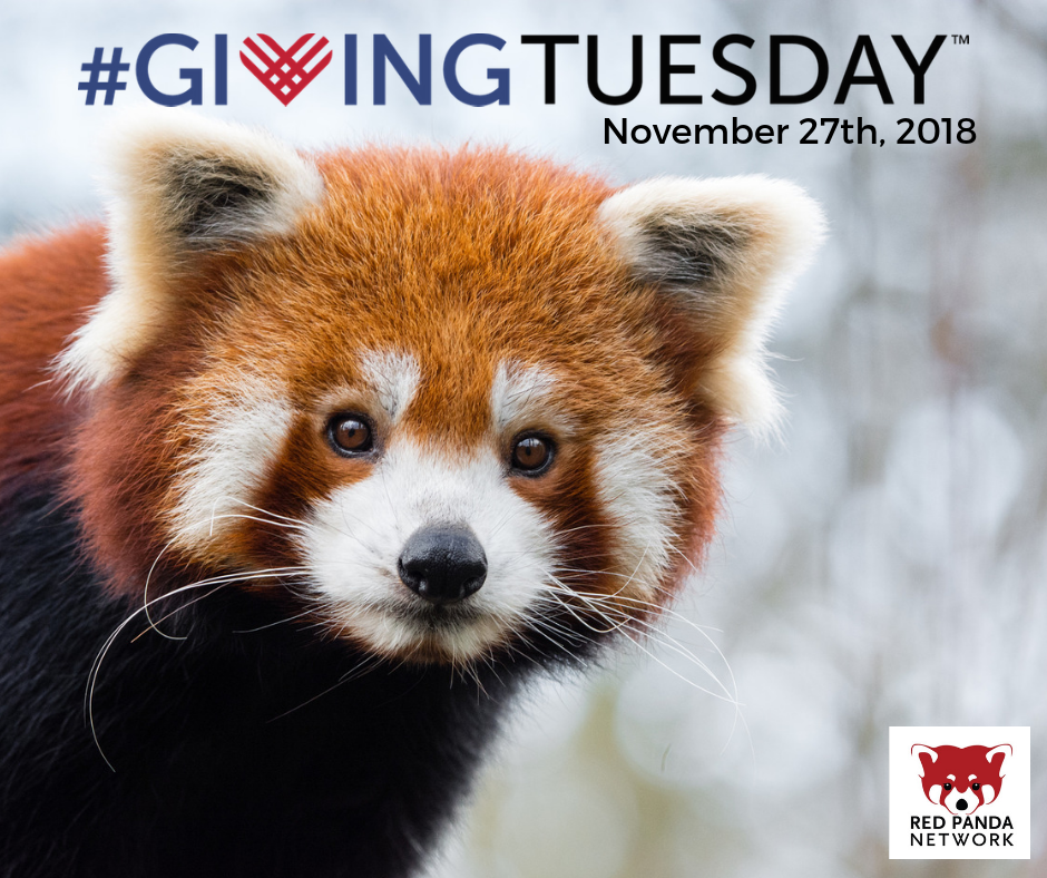 Red Panda Network Giving Tuesday