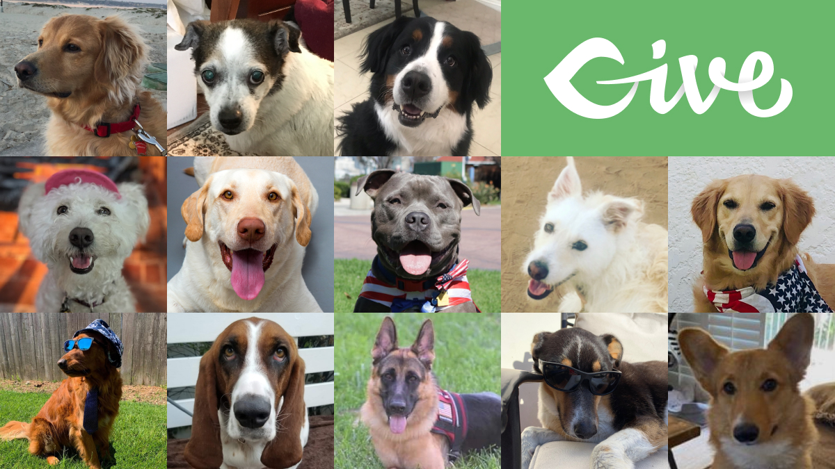 13 Caninedidates for the PAWS of Coronado 2020 Canine Mayoral Election